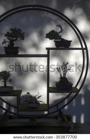 Bonsai tree silhouette against weathered wall - stock photo