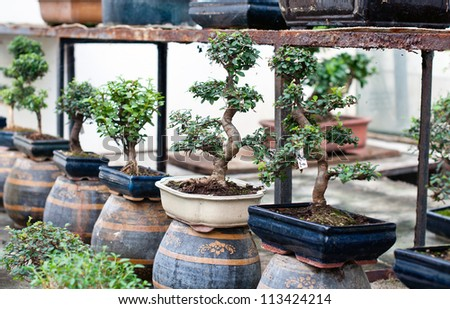 Bonsai trees in pots for sale - stock photo