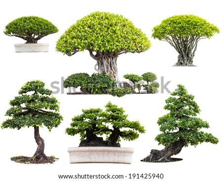 Bonsai trees isolated on white - stock photo