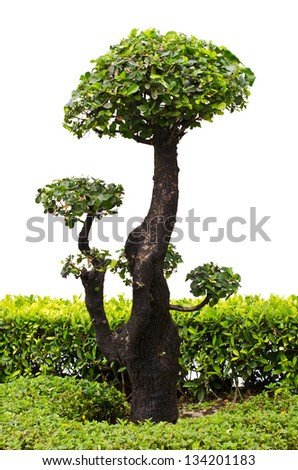 Bonsai trees on a white background.