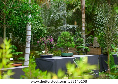 bonsais exhibition in a botanical garden - stock photo