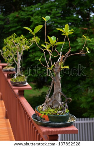 bonzai trees on balcony - stock photo