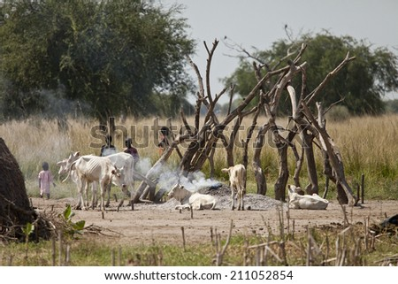 BOR, SOUTH SUDAN-DECEMBER 4 2010: Unidentified children at a cattle camp with thin cattle in South Sudan - stock photo