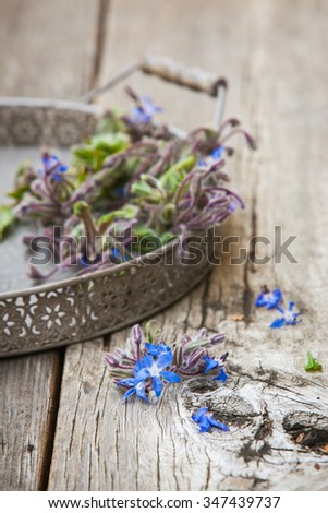 Borage (Starflower) on a wooden board. Also available in horizontal format.