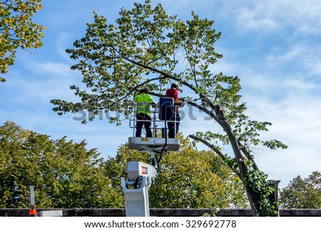 BORDEAUX, FRANCE, October 19, 2015 : Workers, agents of maintenance of the municipality of Bordeaux, cut the branches of large trees lining the boulevards in downtown.