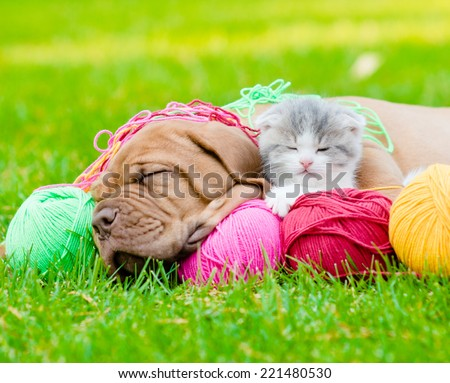 Bordeaux puppy dog and newborn kitten sleeping together on green grass - stock photo