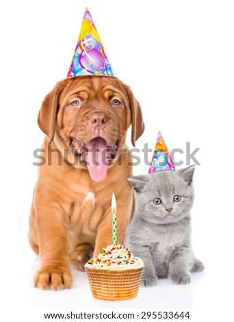 Bordeaux puppy dog and scottish kitten with birthday hats and cake. isolated on white background - stock photo