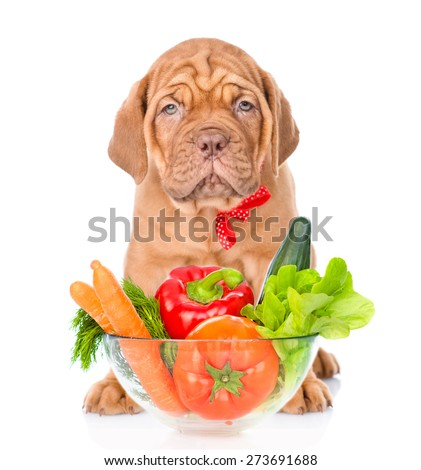 Bordeaux puppy dog sitting with a bowl of vegetables. isolated on white background - stock photo