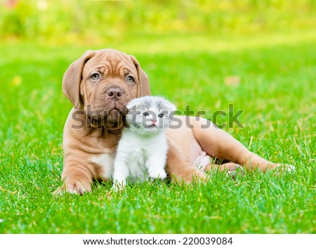 Bordeaux puppy dog with newborn kitten on green grass - stock photo