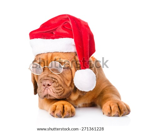Bordeaux puppy with glasses in red santa hat. isolated on white background - stock photo