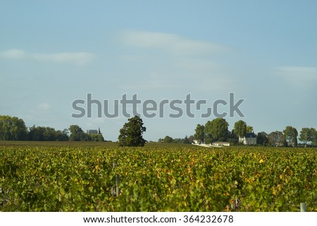 Bordeaux vignoble of Pauillac - stock photo