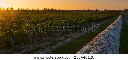 Bordeaux Vineyard-Medoc-France - stock photo