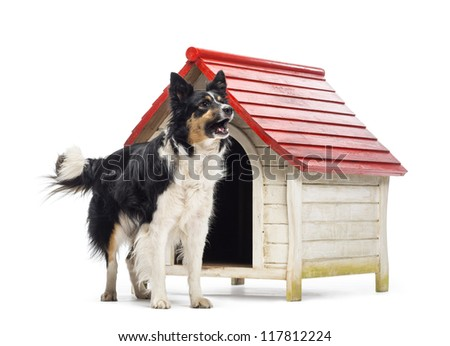 Border Collie barking next to a kennel against white background - stock photo