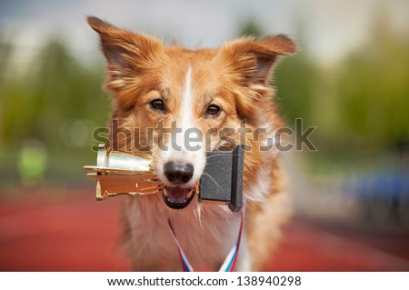 border collie dog portrait with medal and award - stock photo