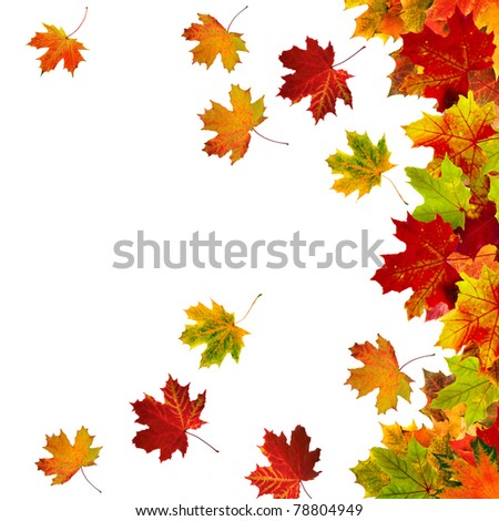 Border Frame of colored autumn leaves isolated on white background