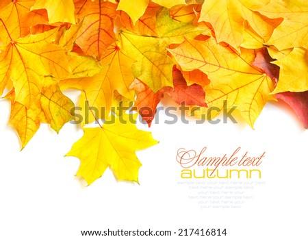 Border frame of colorful autumn leaves isolated on white - stock photo