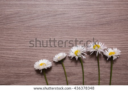 Border from fresh fragrant chamomile  flowers on vintage  background. Selective focus. Place for text. Fresh flowers on a wooden surface - stock photo