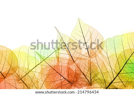 Border of Autumn color transparent Leaves - isolated on white background - stock photo