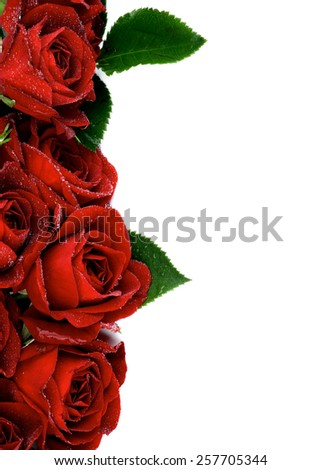 Border of Beautiful Red Roses with Leaves and Water Droplets isolated on white background - stock photo