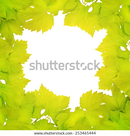 Border of fresh grape leaves lit by the sun - stock photo