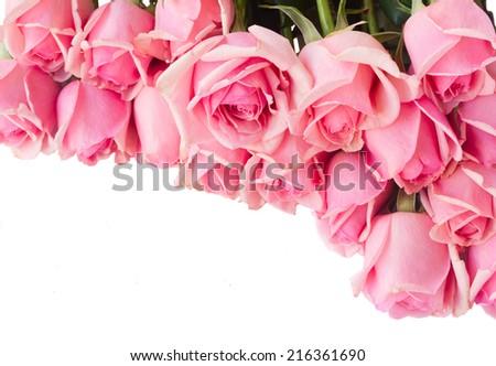 border  of fresh pink  roses  isolated on white background - stock photo