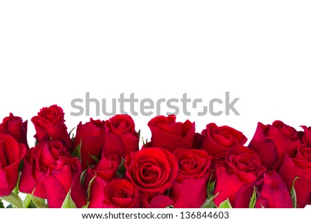 Border Of Fresh Red Garden Roses Isolated On White Background