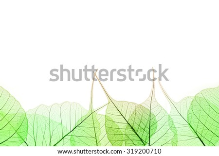 Border of Green Leaves - natural cell structure, isilated on white - stock photo
