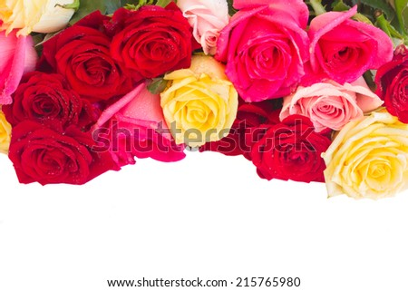 border of  multicolored  roses  isolated on white background - stock photo