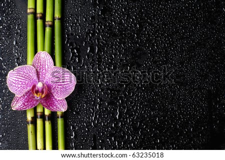 border of phalaenopsis orchid with bamboo grove