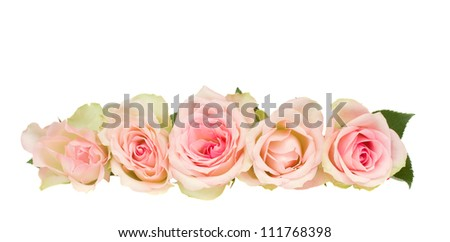 border of pink roses isolated on white background - stock photo