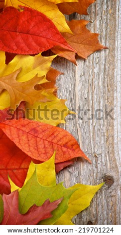 Border of Variegated Autumn Leafs isolated on Rustic Wooden background - stock photo