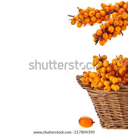 border of wicker basket full sea buckthorn berries  isolated on white background - stock photo