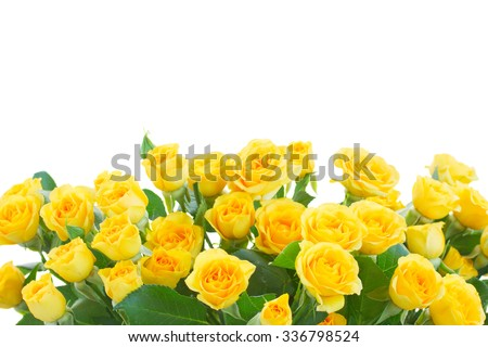 border  of yellow roses  isolated on white background - stock photo