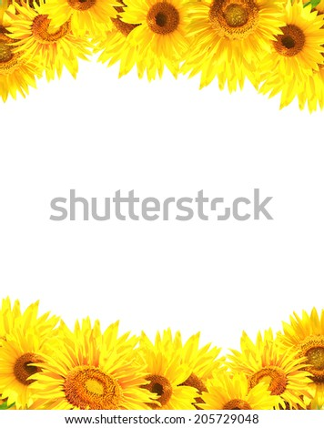 Border with many yellow sunflowers. Isolated on white background - stock photo