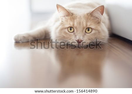 Bored cat - stock photo