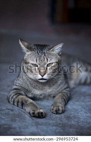 Bored cat lying down on floor - stock photo