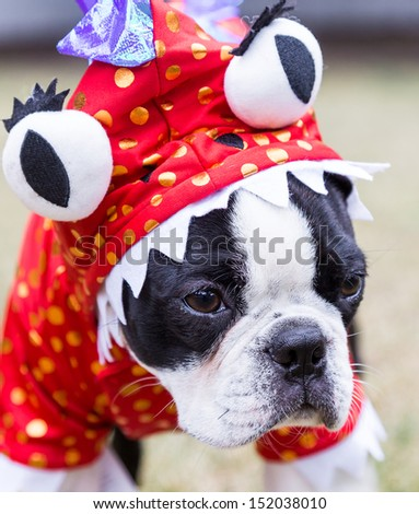 Boston Terrier Puppy in Monster Costume - stock photo