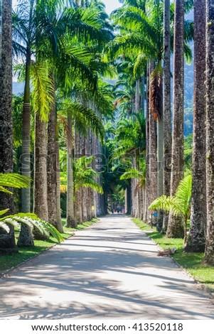 Botanical garden in Rio de Janeiro, Brazil. - stock photo