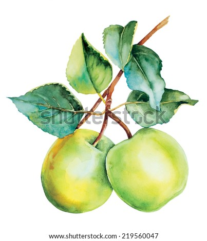 Botanical green apples tree watercolor