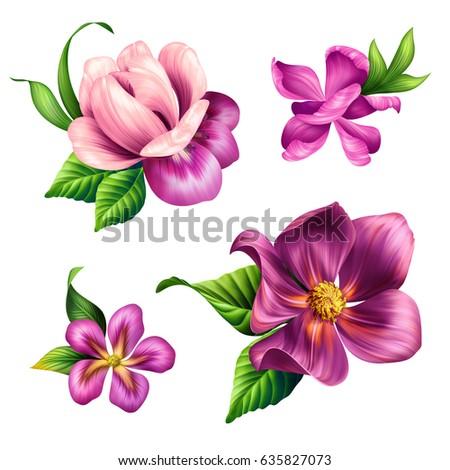Botanical Illustration Beautiful Tropical Nature Pink Flowers Clip Art Design Elements Set