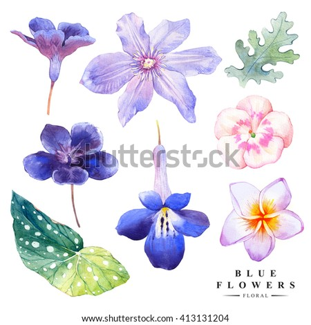 Botanical illustration with realistic tropical flowers and leaves. Watercolor collection of blue flowers, plumeria, clematis. Handmade painting on a white background. - stock photo