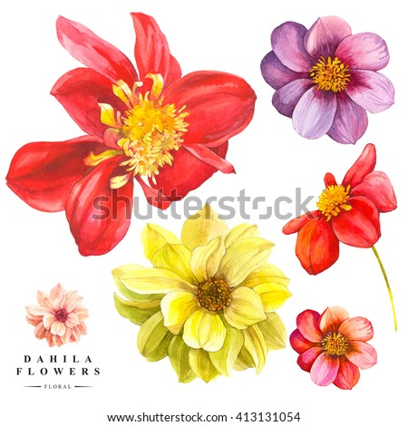 Botanical illustration with realistic tropical flowers and leaves. Watercolor collection of red and yellow dahlia flowers. Handmade painting on a white background. - stock photo