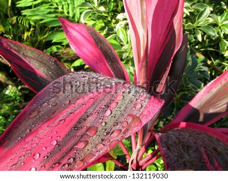 Botanical Life, Costa Rica - stock photo