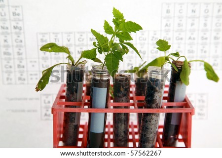 Botanical research, plants growing in test tubes in a research laboratory - stock photo