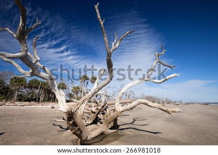 Botany Bay beach, Edisto Island, South Carolina, USA - stock photo