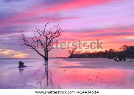 Botany Bay Plantation Single Dead Tree at Sunset in Charleston SC Landscape scene in South Carolina - stock photo