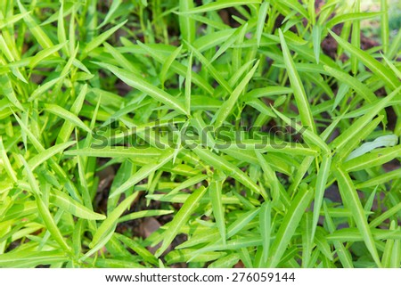 botany, nature, biology, eco and flora concept - close up of green grass or herb outdoors - stock photo