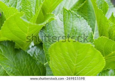 botany, nature, biology, eco and flora concept - green palm tree leaf - stock photo