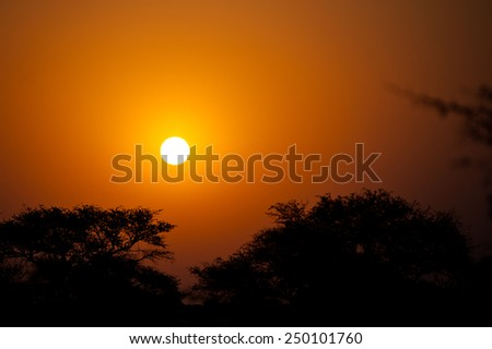 Botswana, Kalahari Desert, Africa - stock photo