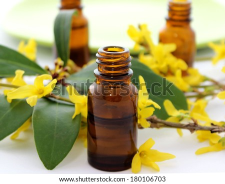 Bottle of essential oil and flowers forsythia isolated on white background